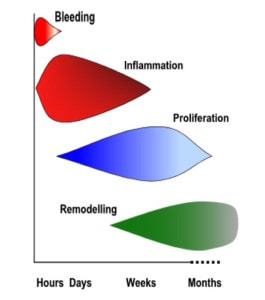 Healing Timeframe 265x300 The Stages Of Normal Tissue Healing